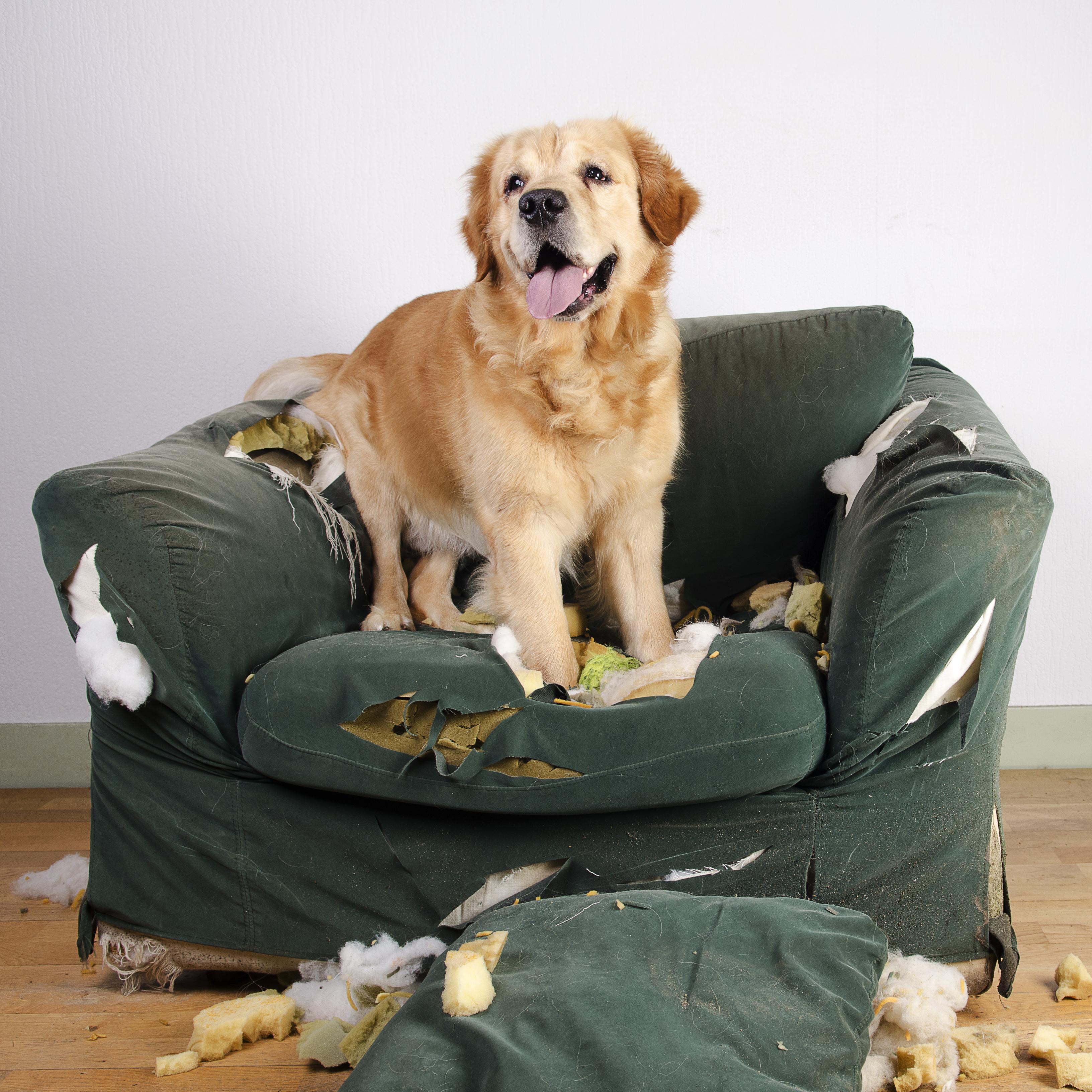 stop destructive chewing