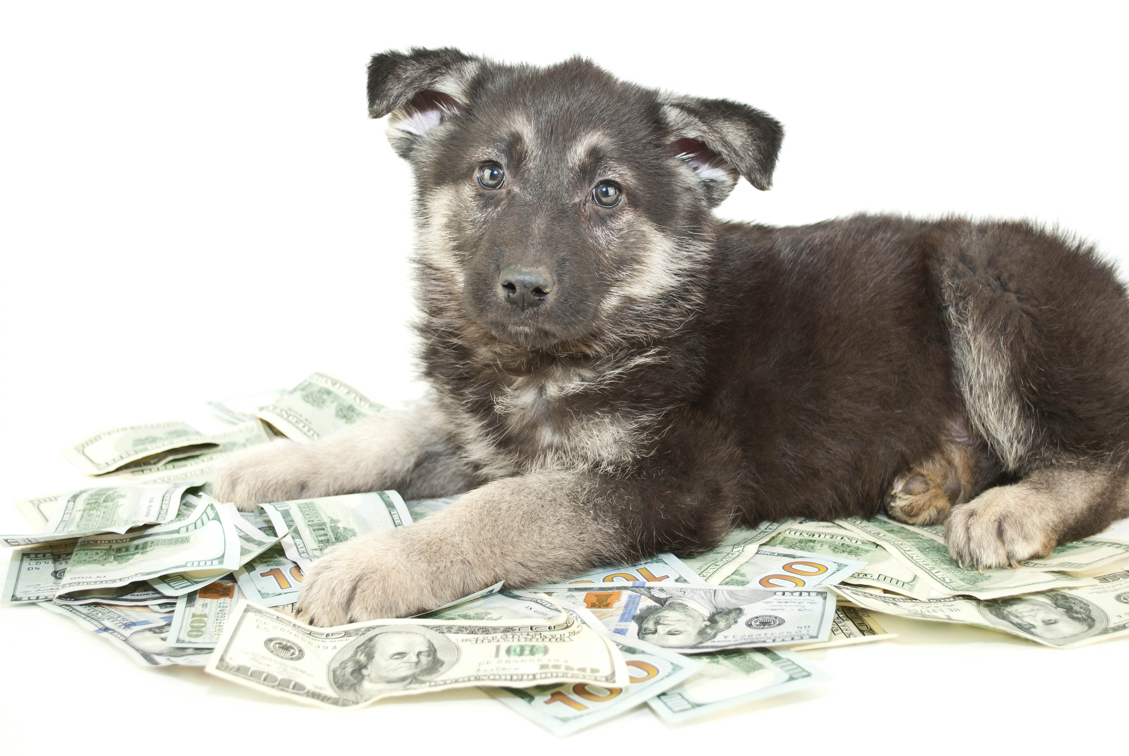 How Much Raising Puppy Costs
