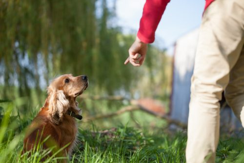 train a well-behaved dog, all things pups