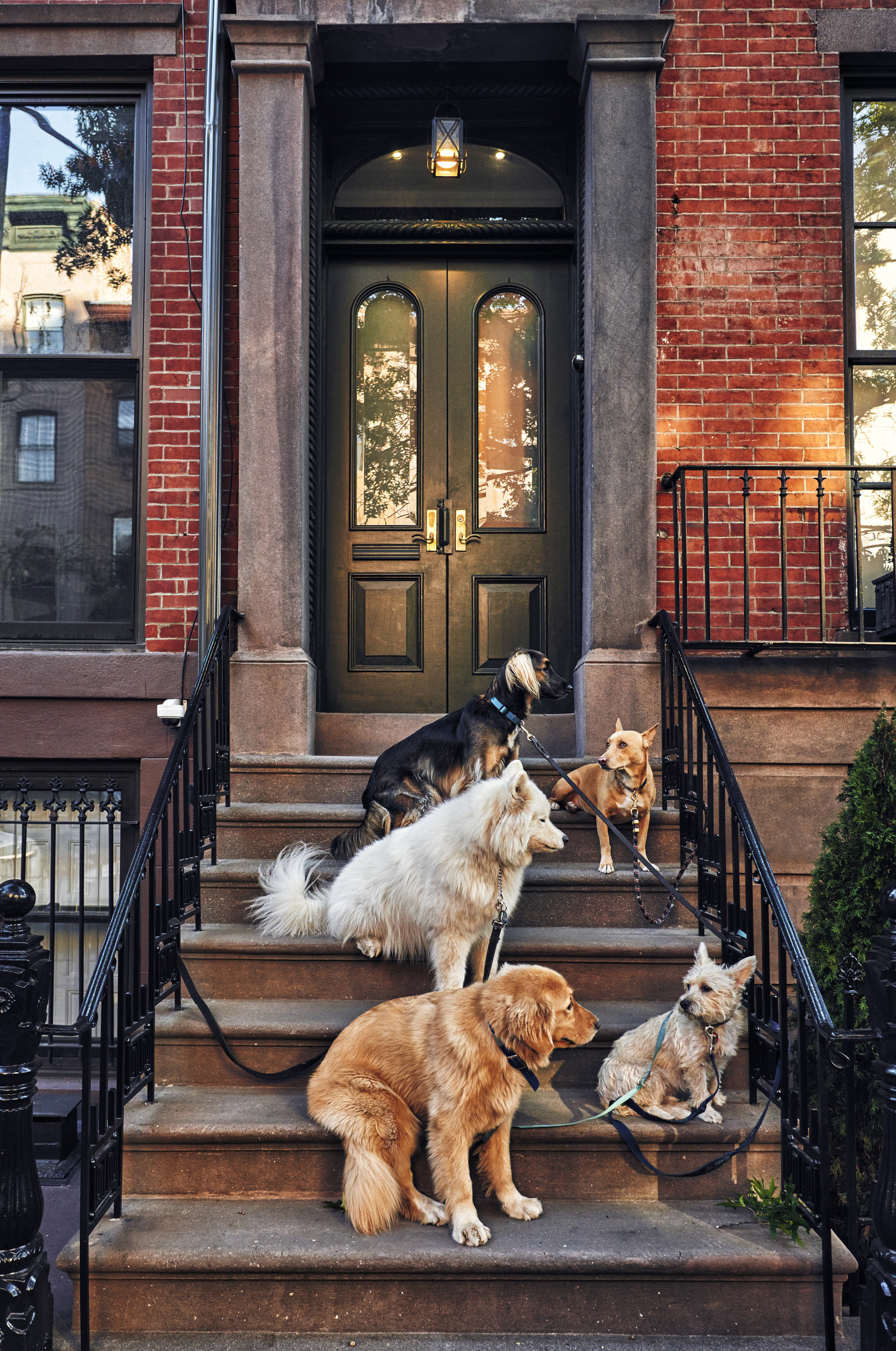 dogs sitting on a stoop.