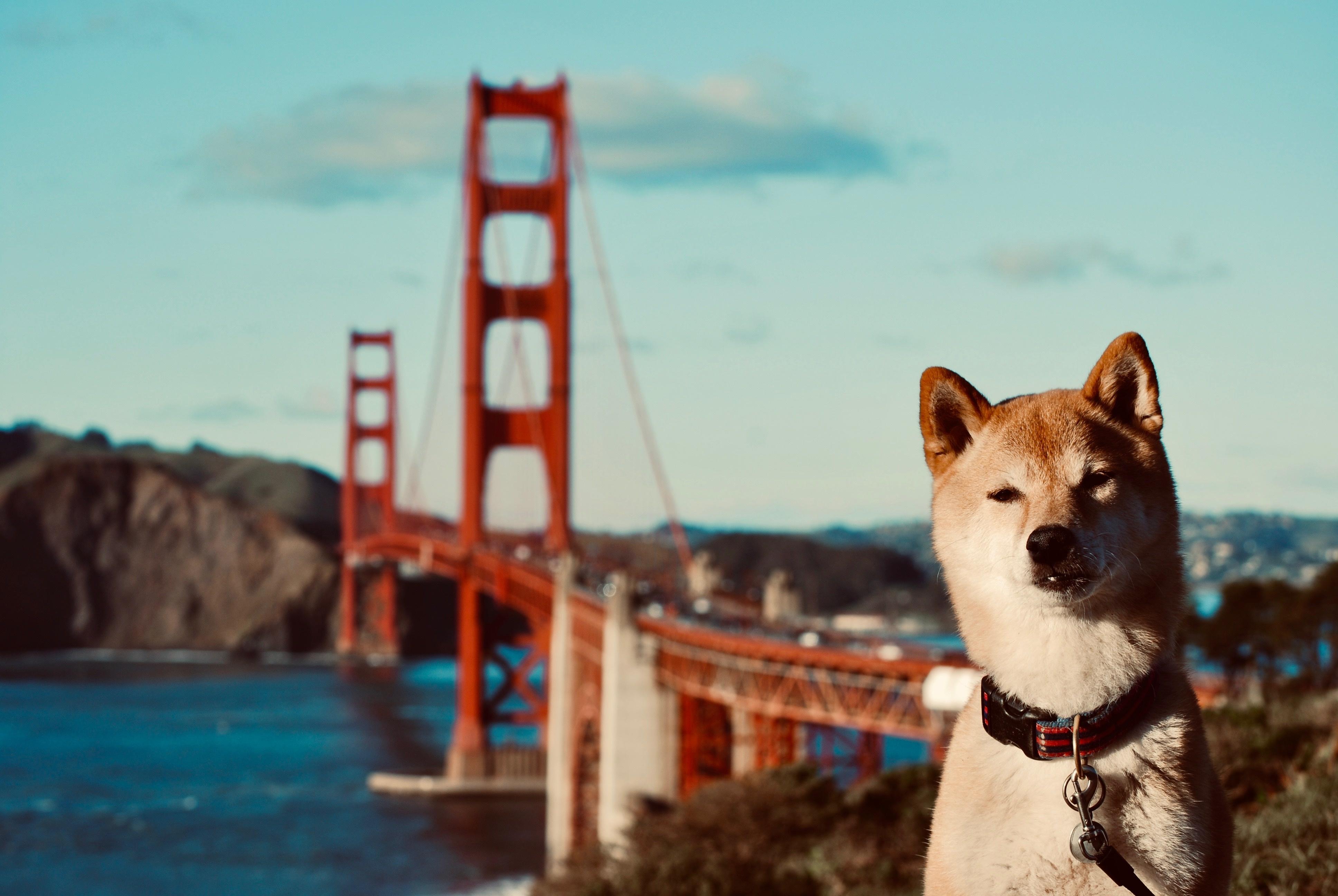 Dog at Golden Gate Bridge