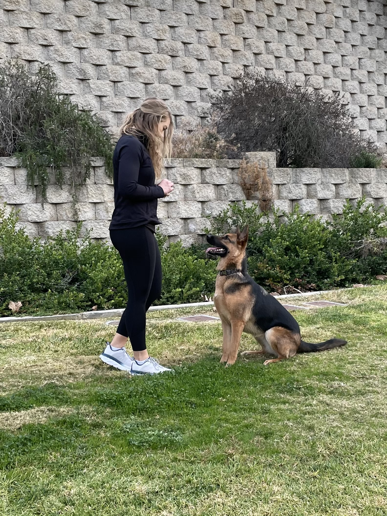 Zoey training a german shepherd