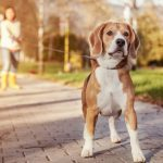 your dog's safety