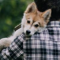 Young man with beautiful Siberian Husky puppy